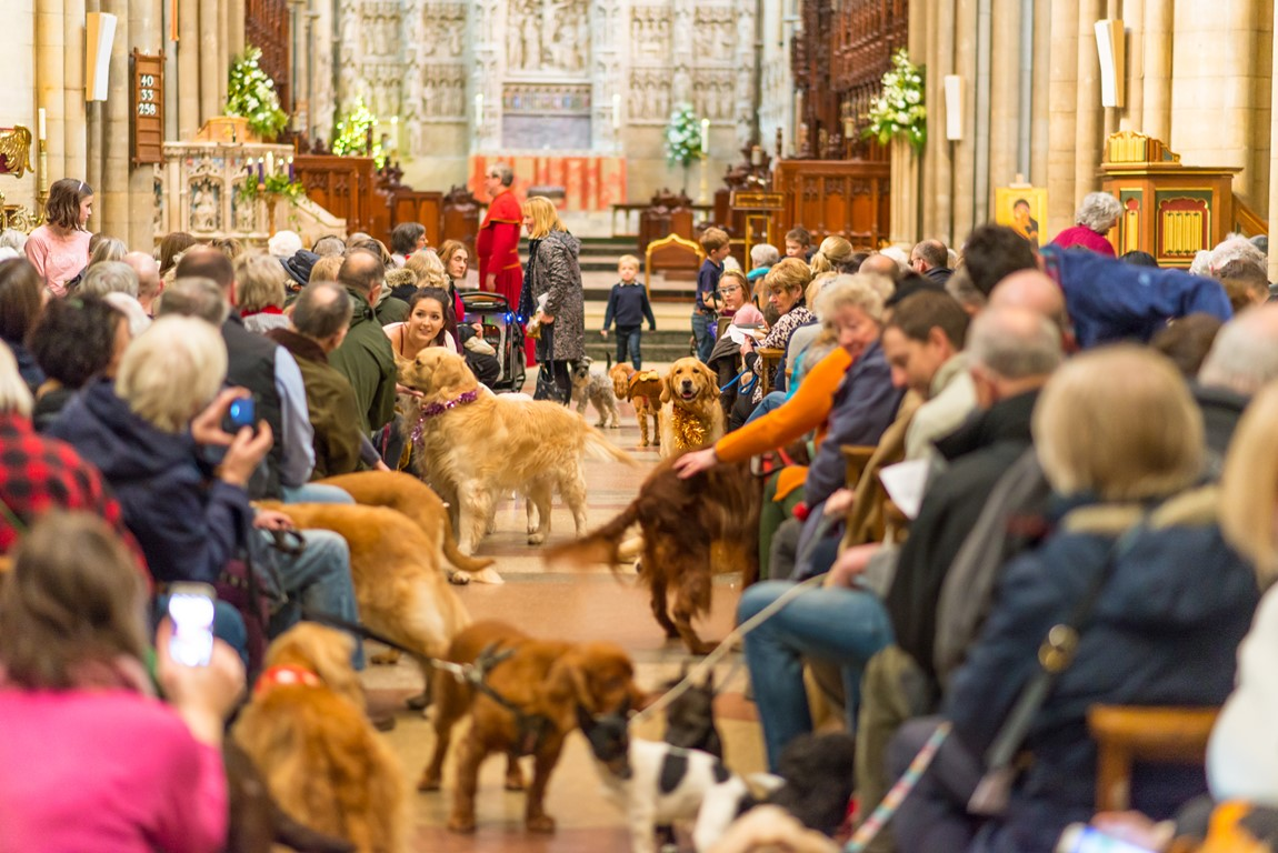 Lots of dogs in the aisle of Truro Cathedral at the pets carol service