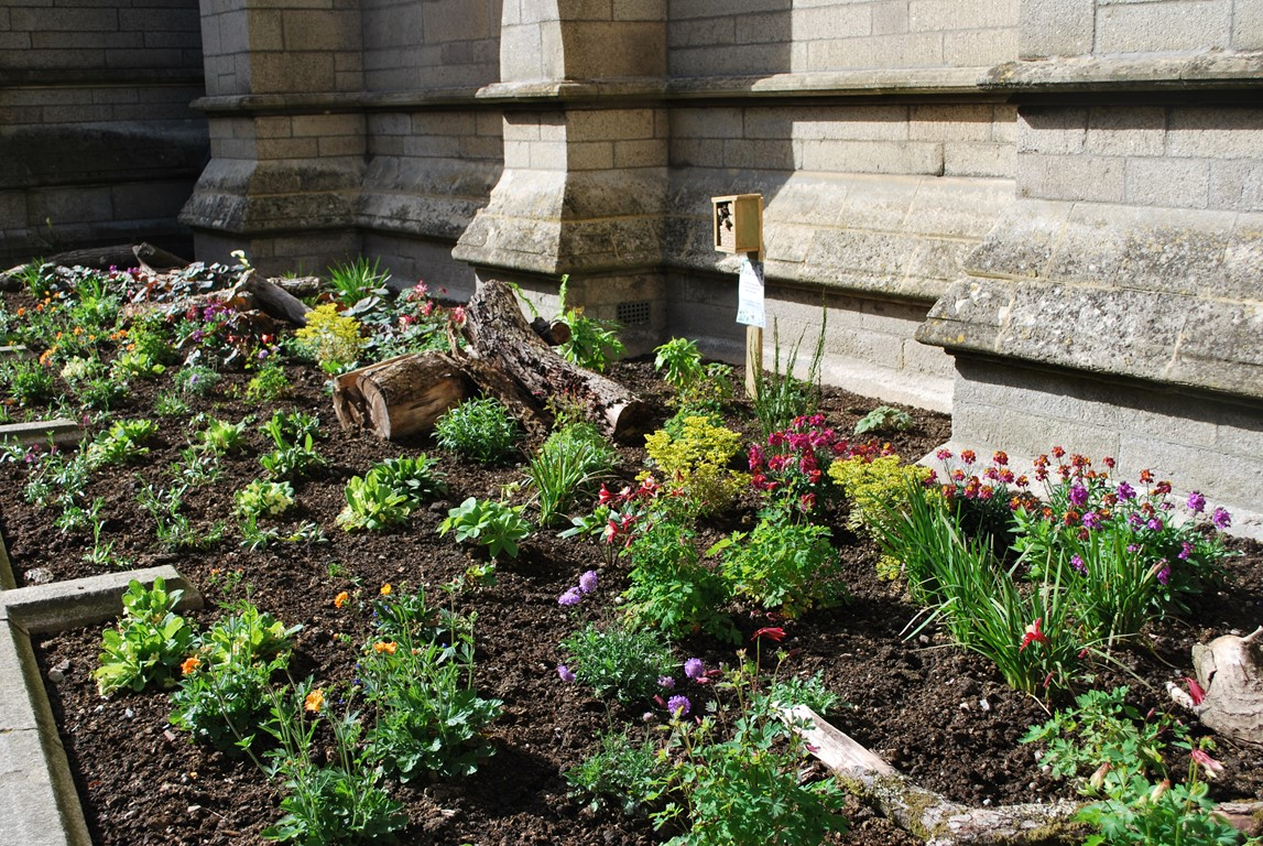 Wildlife Garden outside Truro Cathedral on High Cross